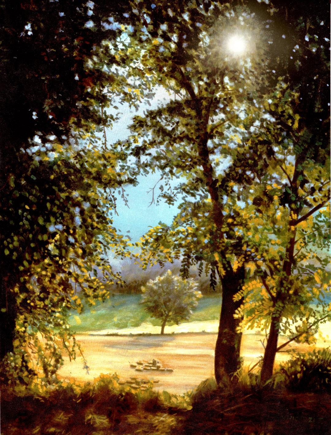dipinti Marche bosco in controluce