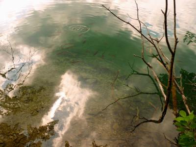 lago trote e ramo secco