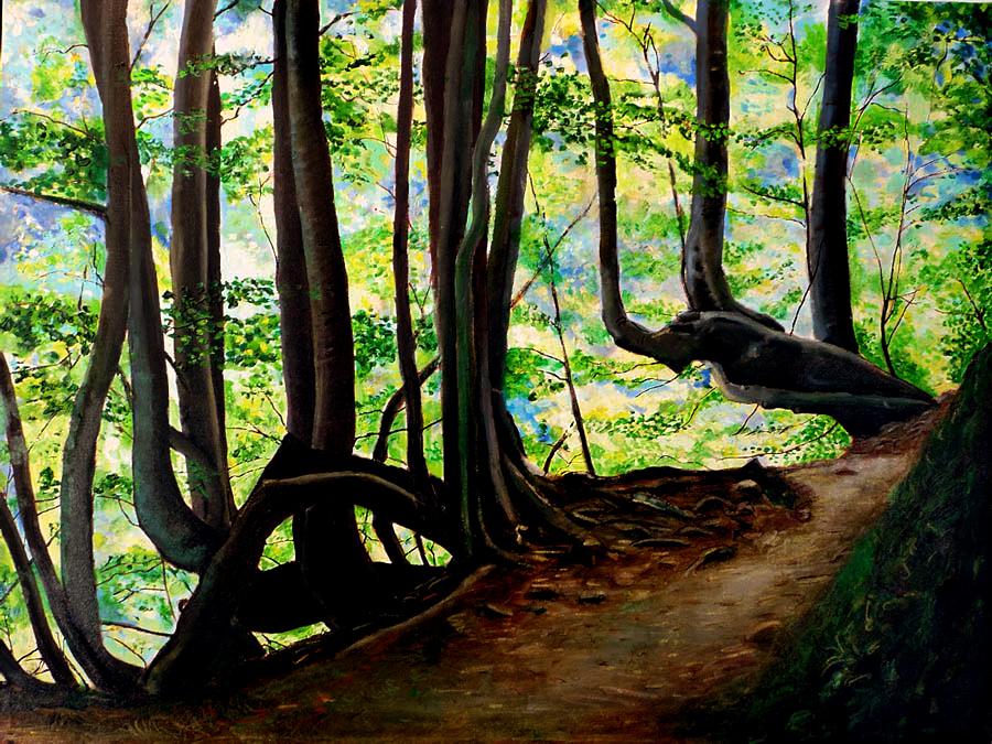 passeggiata nel bosco d'abruzzo la luce filtra dai rami